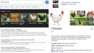Google Knowledge Graph now has animal/pet informations
